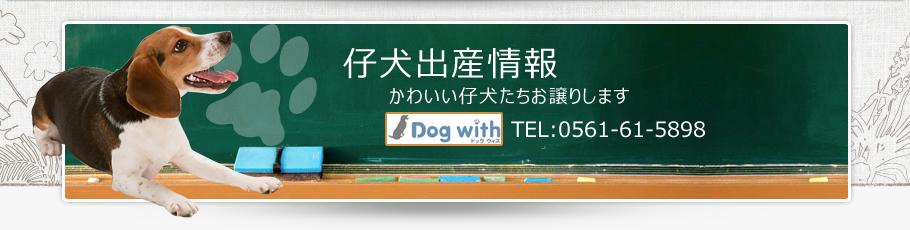 子犬出産情報・成犬販売情報