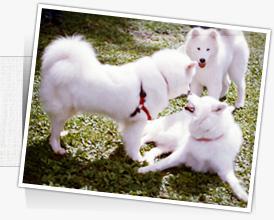 image-dog